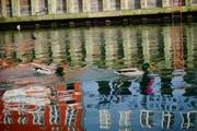 運河の多いコペンハーゲンは昔ニシンの漁村でした